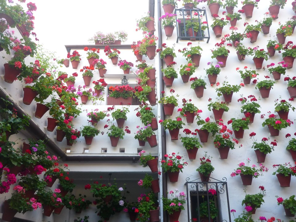 Mayo en Córdoba, patio de San Basilio