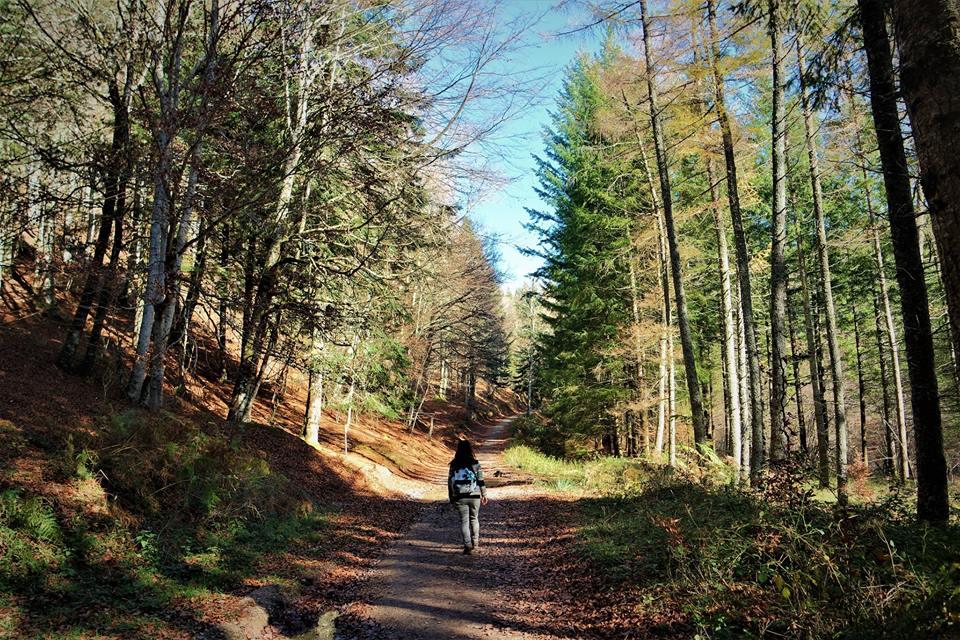 Camino de la Selva de Irati