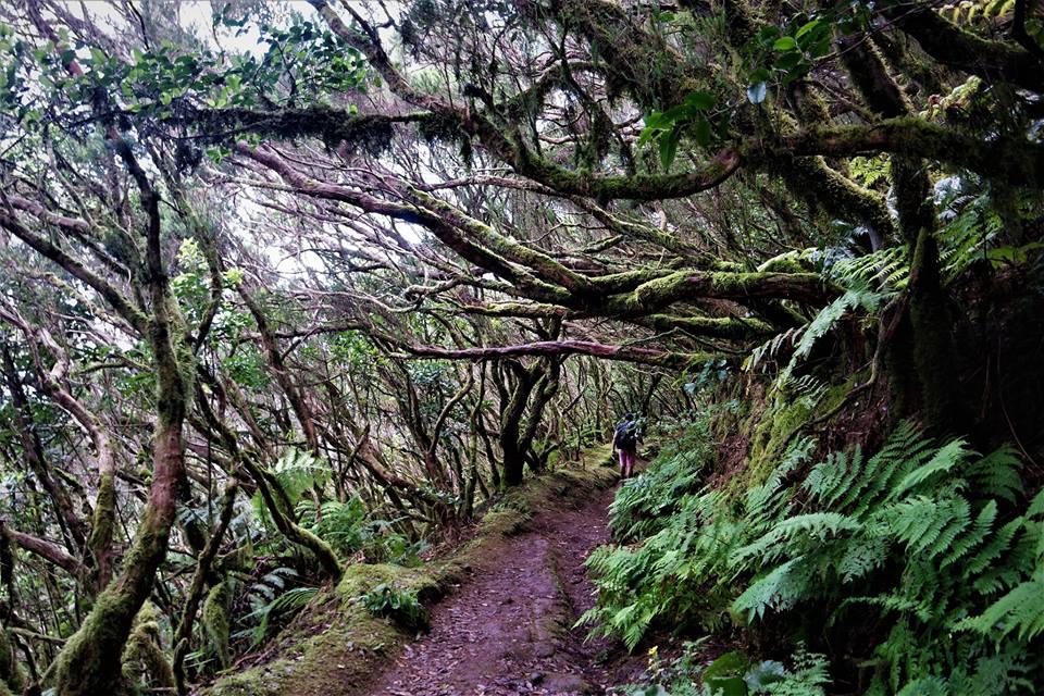 Anaga, el bosque de Laurisilva de Tenerife