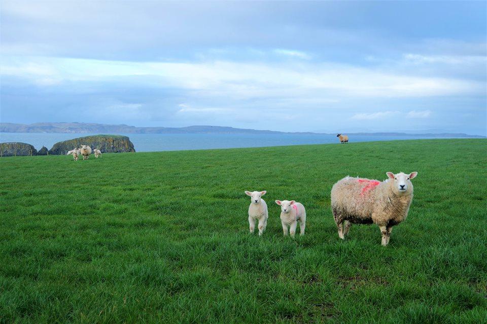 Razones para viajar a Irlanda