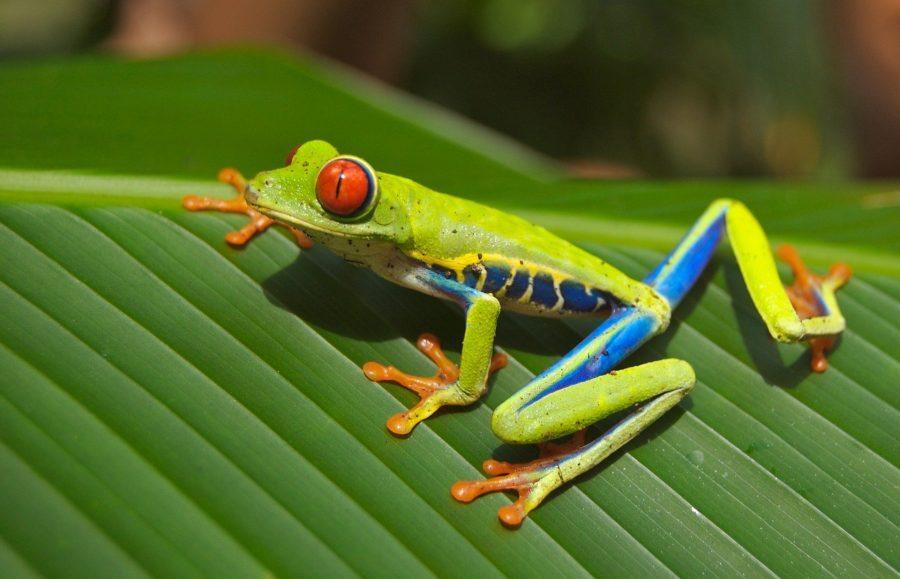Rana, qué ver en Costa Rica