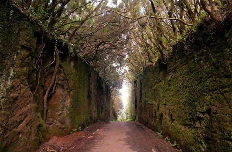 Bosque de Anaga en Tenerife, leyendas de Canarias