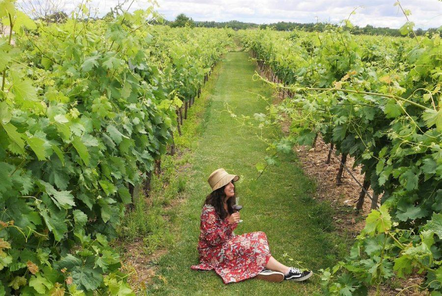 Entre viñedos, Ruta del vino de Toro